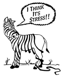 "Zebra with stripes falling off. The zebra is saying ""I think it is stress"""