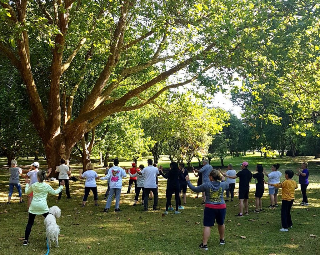 Group of people doing tai chi under beautiful green trees